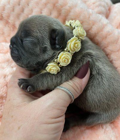 Female Puppy 3