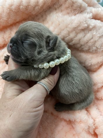 Female Puppy 1